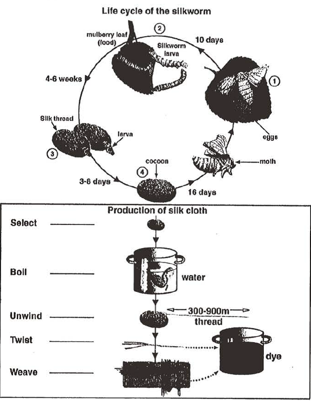 ielts process diagram essay The diagram given shows the process by how milk are the diagram below shows the process of milk production essay topics: the diagram below shows the process.